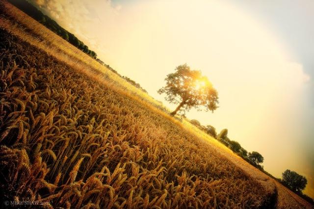 My Harvest